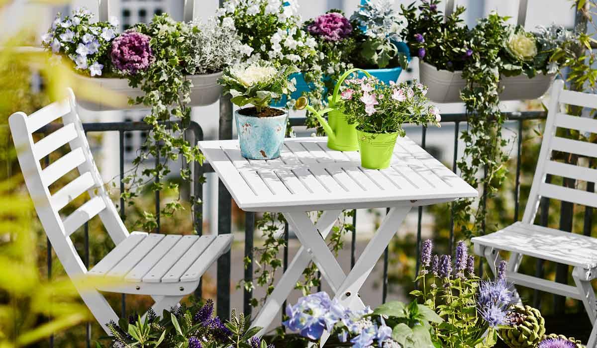Blumen Fur Den Sonnigen Balkon