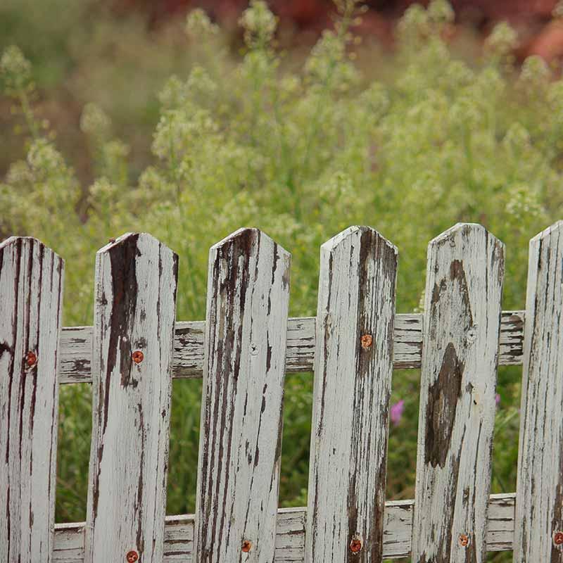 Sichtschutz Fur Den Garten Immonet
