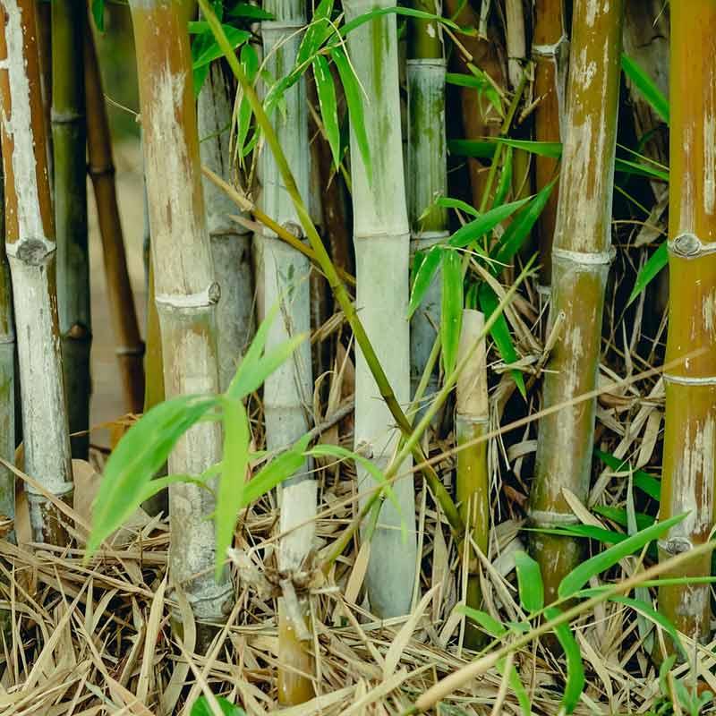Bambus Im Garten Immonet