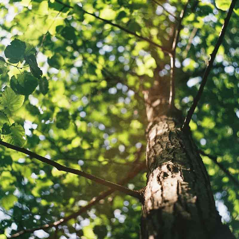 Beliebt Bevorzugt Baum pflanzen | Immonet #OF_02