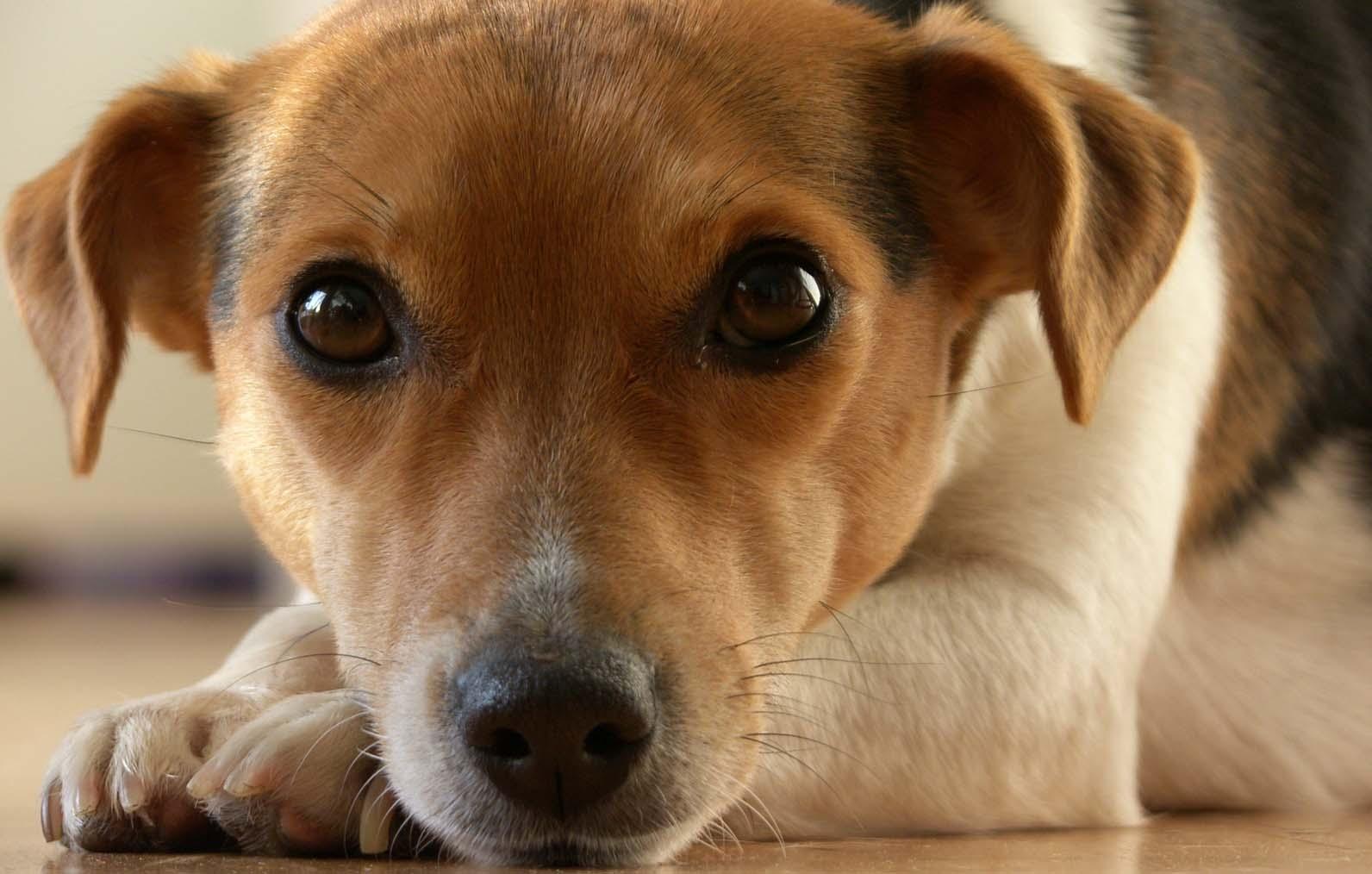 Urteil Des Bgh Zur Hund Und Katzenhaltungimmonet
