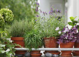balkonpflanzen ber die urlaubszeit retten. Black Bedroom Furniture Sets. Home Design Ideas
