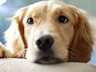 Aktuelles Mietrecht Tierhaltung: Warum Sie sich als Haustierbesitzer freuen können