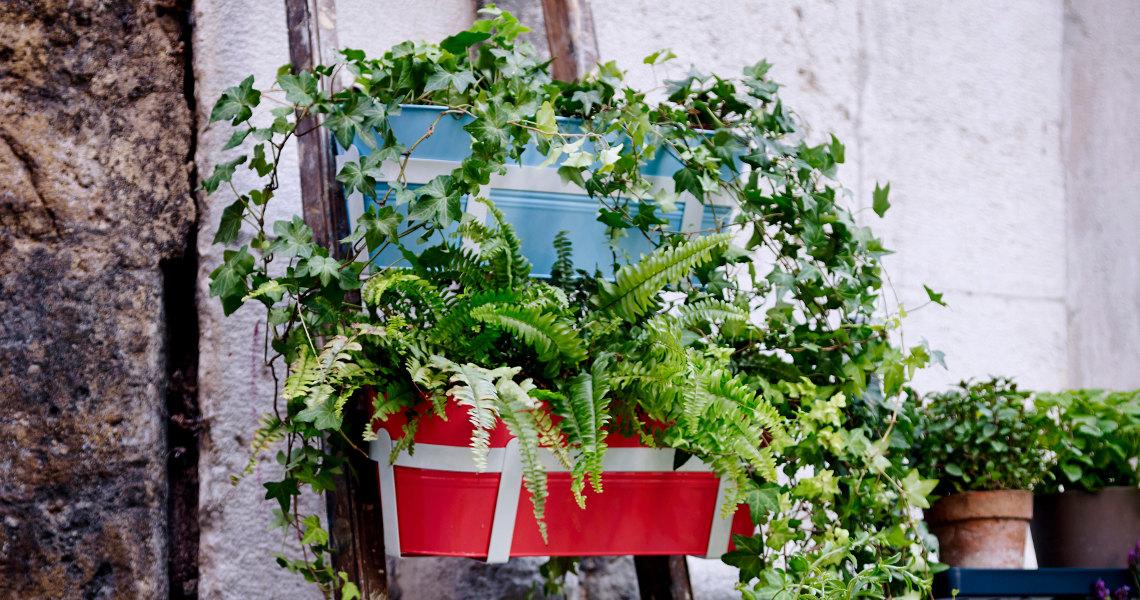 Blumen Gießen Urlaub balkonpflanzen über die urlaubszeit retten