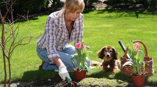 Eisheilige Datum vorsicht eisheilige was beim pflanzen beachten muss