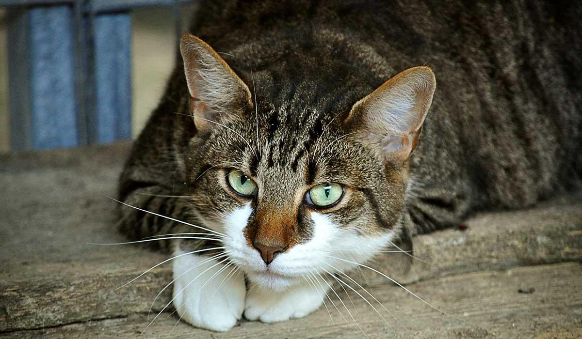 Katzensichere Wohnung Immonet