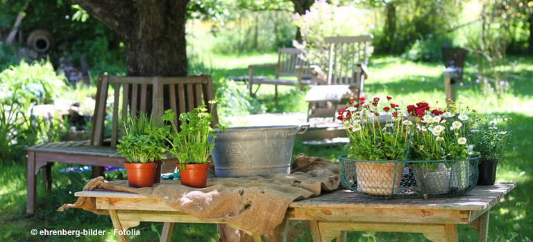 Pflanzen Für Balkon Und Garten Welche Pflanzen Fur Den Balkon